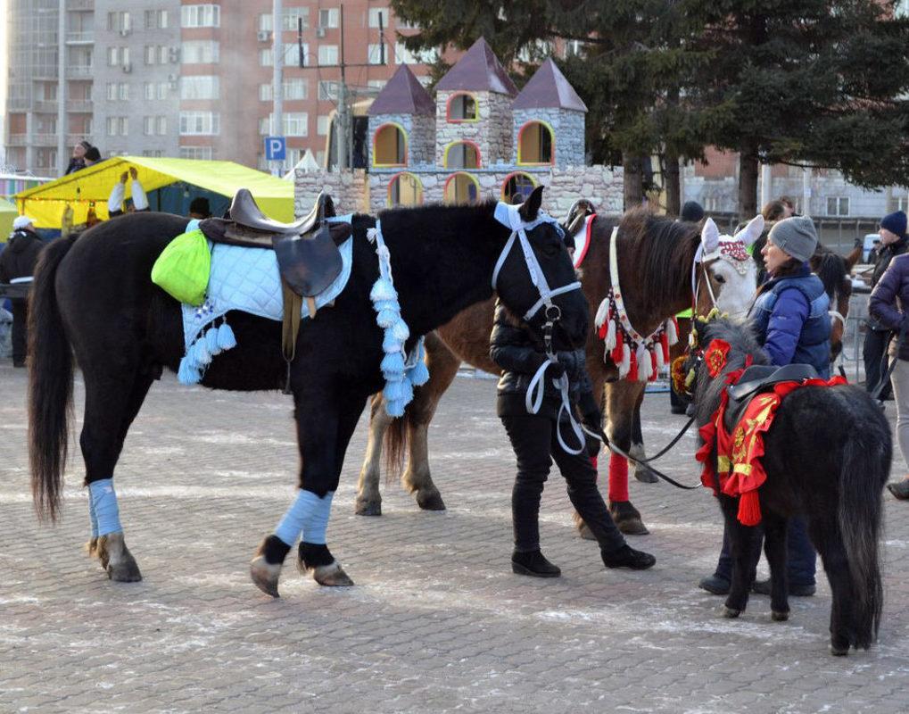 В УФАС посоветовали заниматься прокатом лошадей напротив мэрии