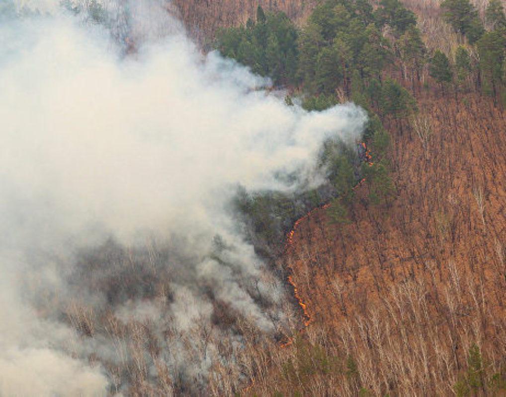 Заповедник «Тунгусский» закрыли для посетителей из-за лесных пожаров
