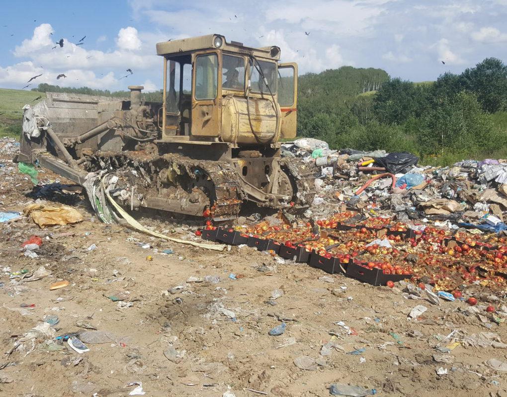 В Красноярске на полигоне уничтожили 450 кг польских яблок