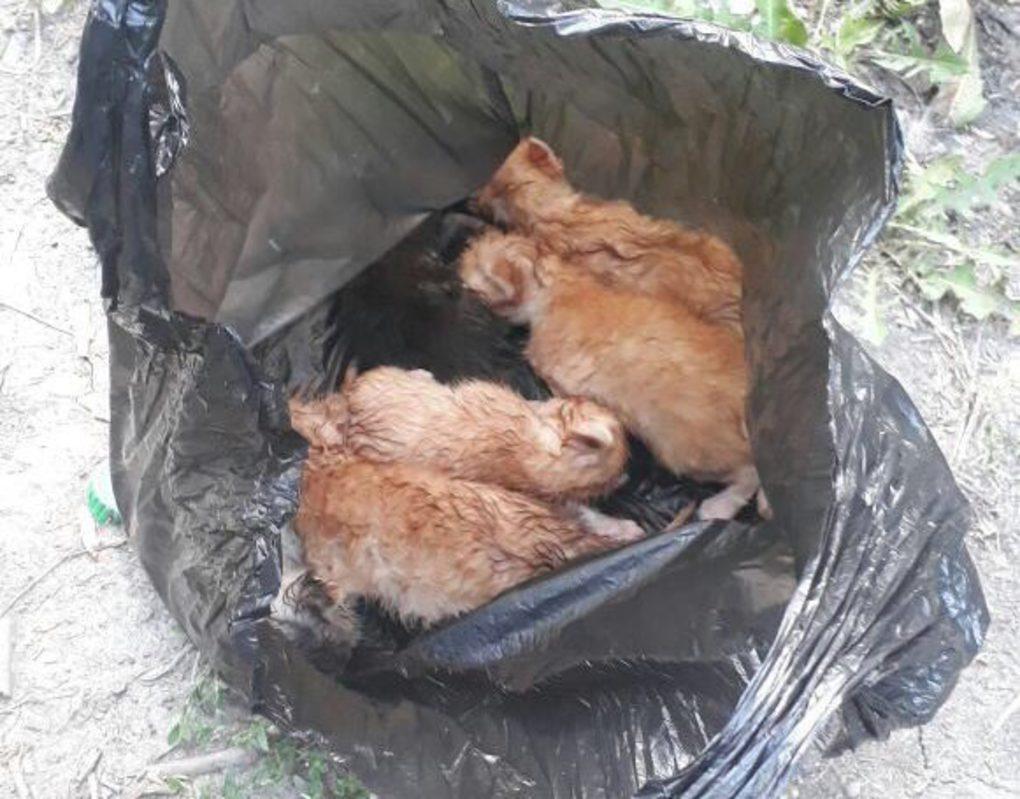 Под Красноярском в колодец выбросили пакет с 7 котятами