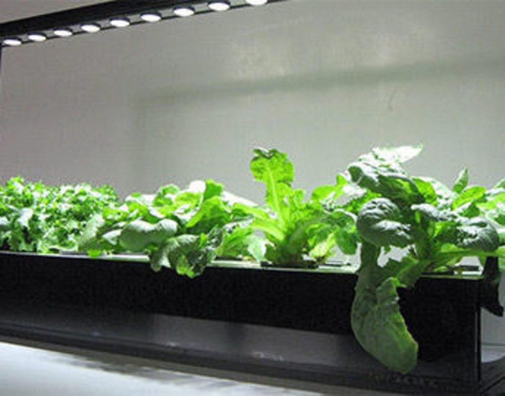Красноярские ученые нашли способ повысить урожайность растений