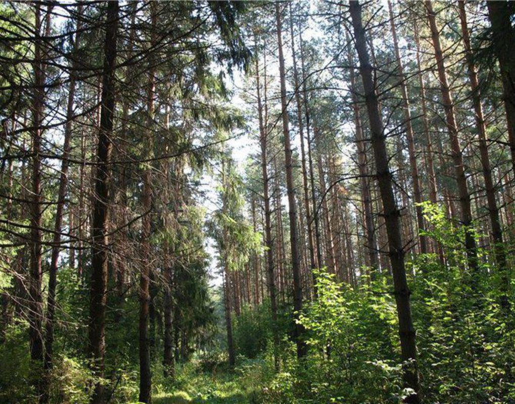 Ученые выяснили, как глобальное потепление повлияет на климат в Красноярском крае
