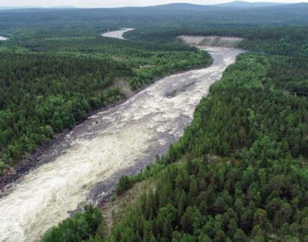 Красноярские ученые рассказали, когда восстановится лес после пожаров