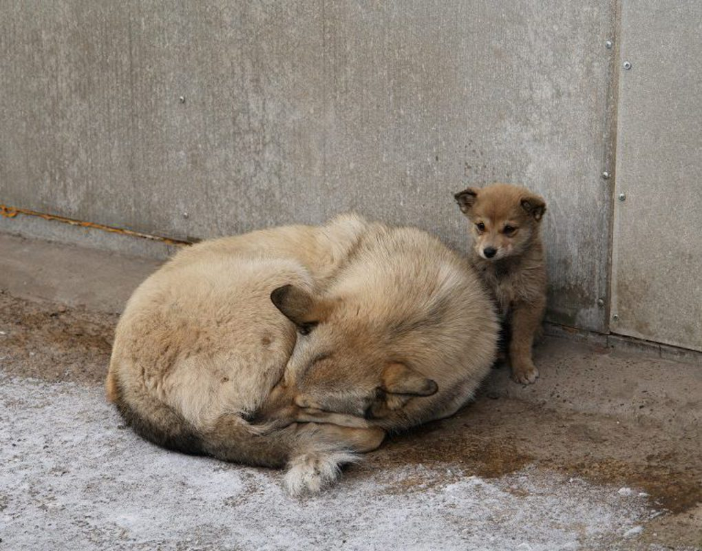 Кодинский клуб защиты животных получил от Богучанской ГЭС средства на медицинское оборудование