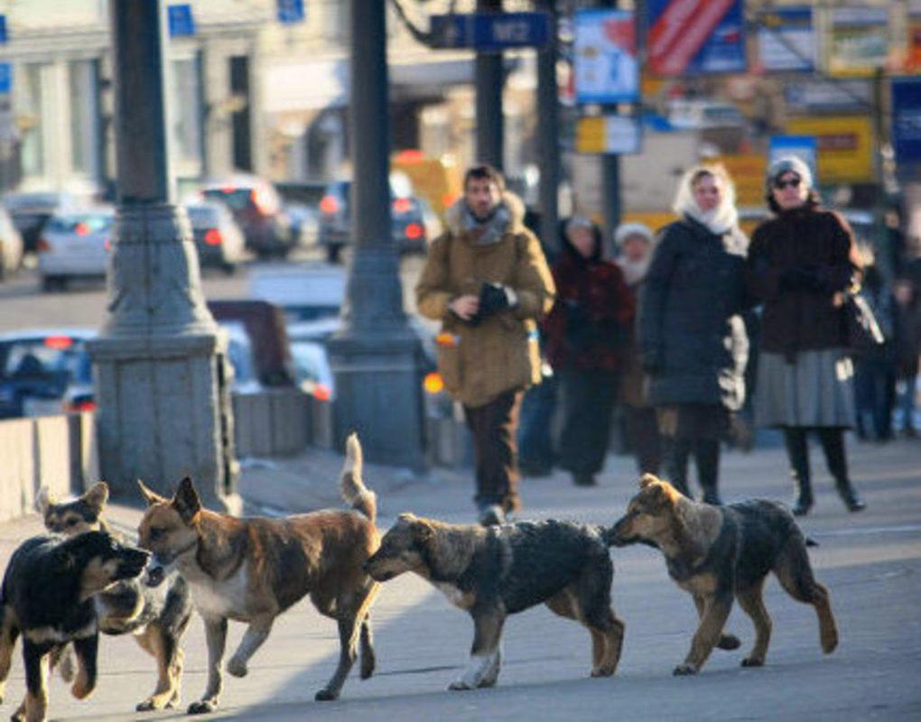 Следователи завели дело после нападения собак на ребенка в Ленинском районе