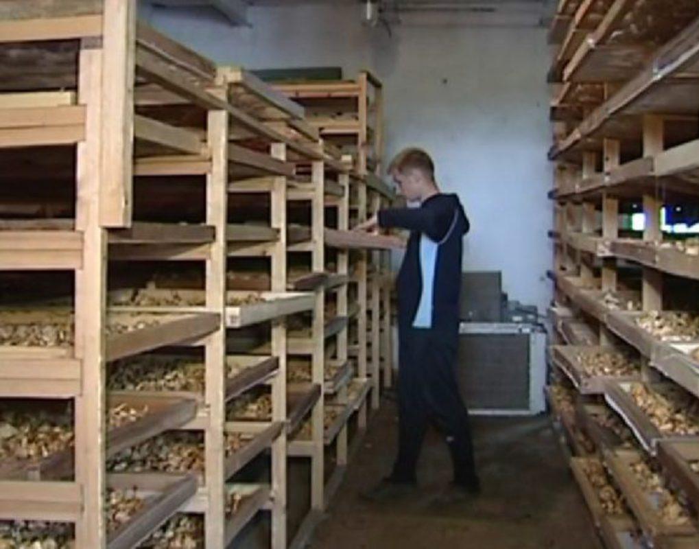 В крае хотят запустить завод по производству сушеной органической еды