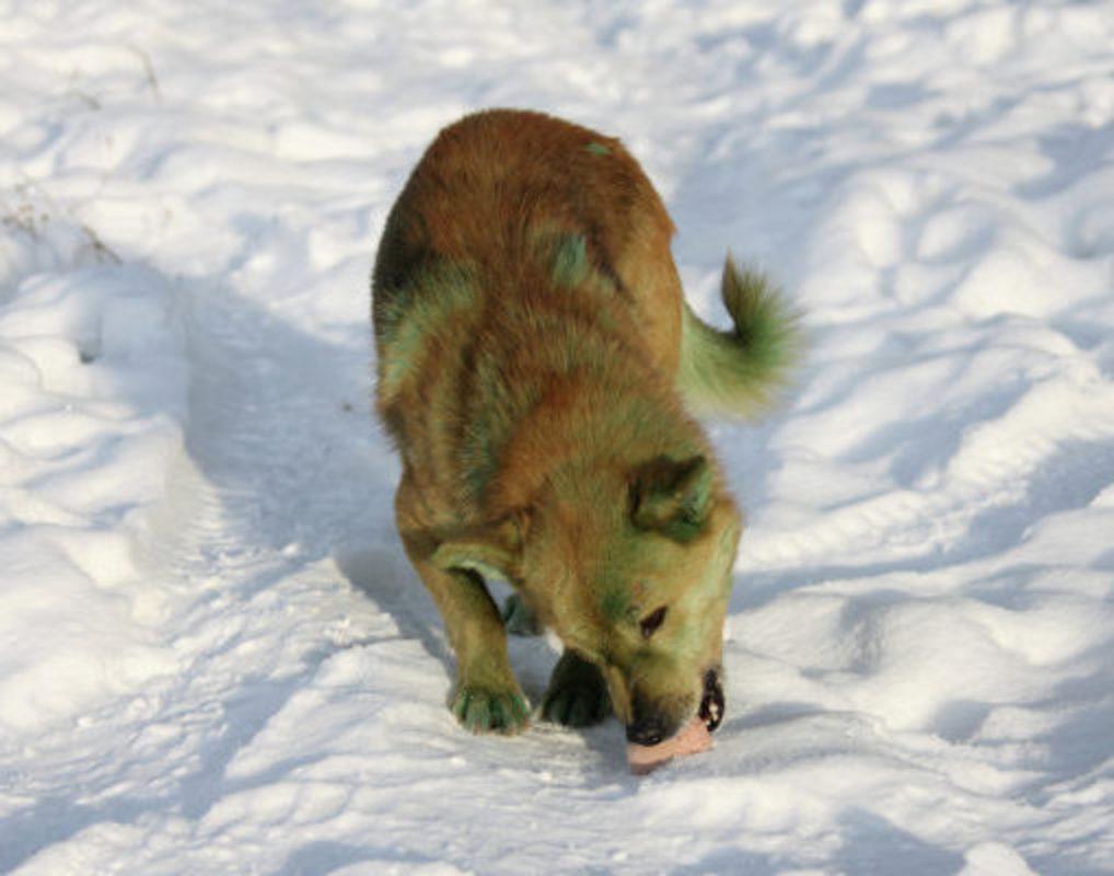 На отлов бродячих собак в крае требуется еще 38 млн рублей