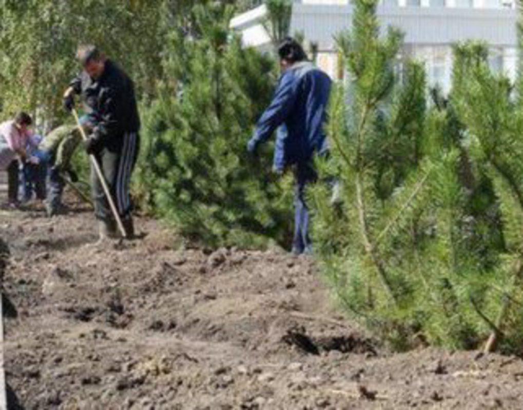 Красноярцев позвали на публичные слушания по благоустройству и озеленению города