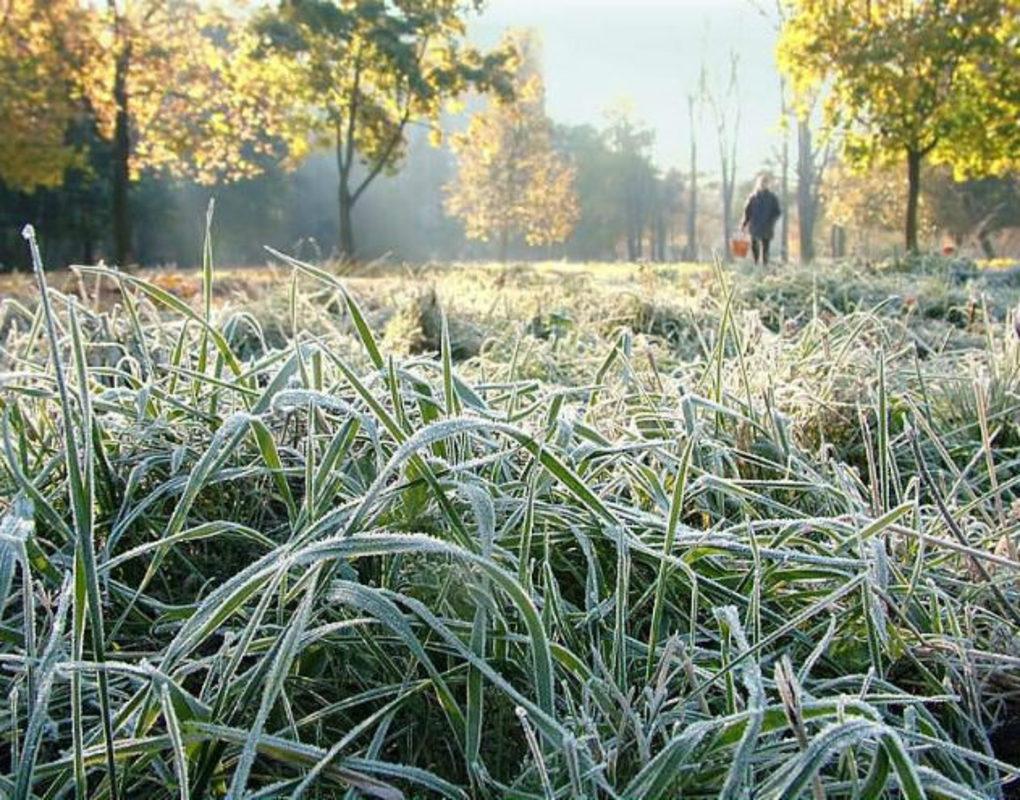 Конец мая в Красноярском крае будет «морозным»
