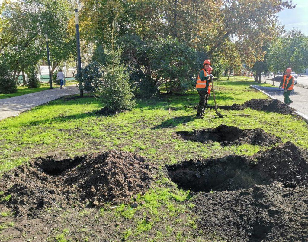 В Красноярске началась осенняя посадка деревьев и кустарников