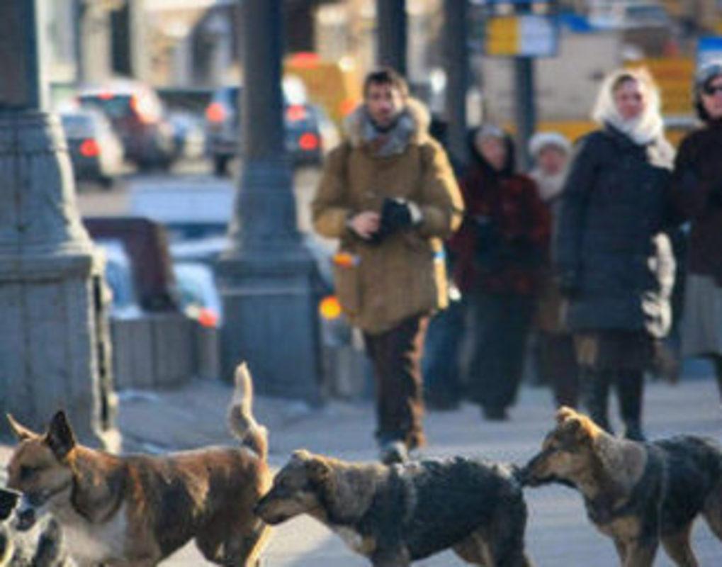 Администрация ищет двух подрядчиков на отлов собак