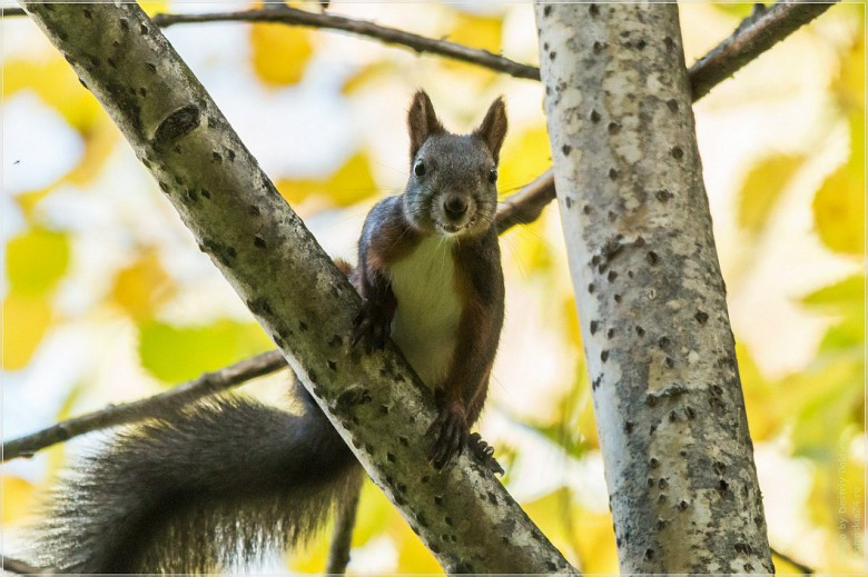 Юркие белки, извечные обитатели местных лесов, показываются наружу все реже — несмотря на теплую шерстку, они, так же как и люди, не любят промозглую погоду, и полюбоваться на этих животных можно лишь в погожий денек.