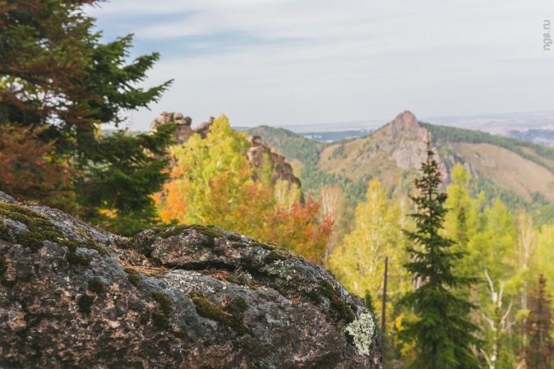 Зеленое покрывало тайги испещрено желтыми и красными вкраплениями лиственных деревьев — в заповеднике «Столбы» осень наступила гораздо раньше, чем в городе. «Буйство красок на деревьях длится в среднем 2–3 недели — разные породы деревьев держат на себе цветную листву неодинаково долго, но ближе к ноябрю исчезнет все. Раньше всех пожелтела береза, а дольше всех радует своими красками яблоня ягодная — в городе этих деревьев очень много», — говорит г-жа Селенина.