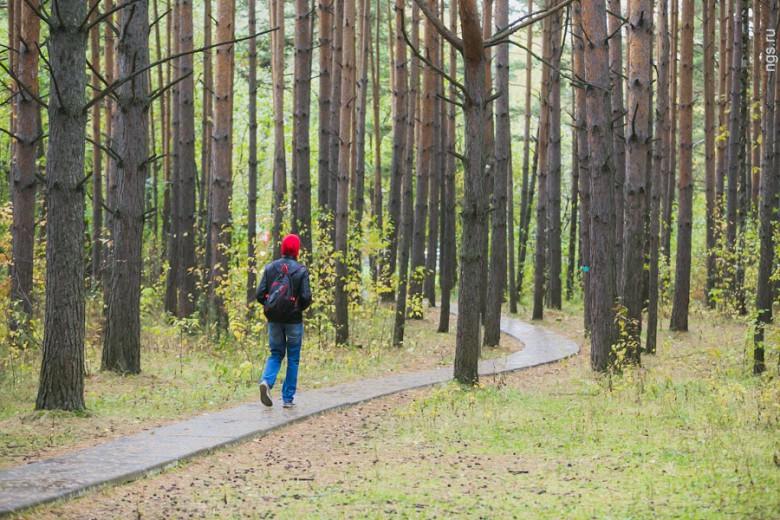 По-настоящему величественно выглядят осенью леса, окружающие Академгородок: огромные сосны закрывают тропинки от внешнего мира, а пробивающаяся между ними цветная листва более мелких деревьев добавляет общей мрачности леса дополнительный колорит.