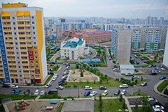 Муравейники Красноярска
