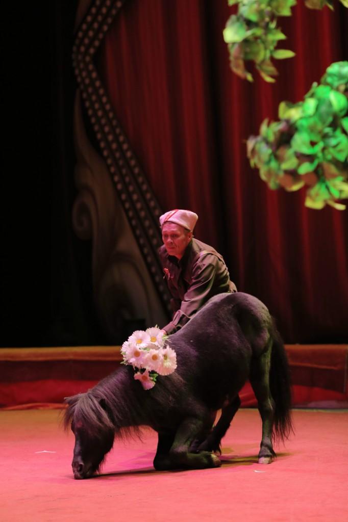 Большой Московский цирк «Триумф» фото 25