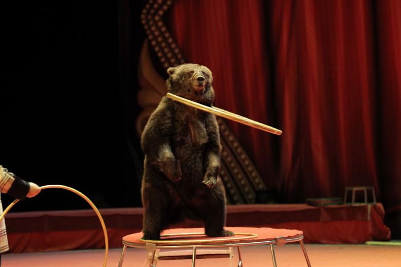 Большой Московский цирк «Триумф» фото 7