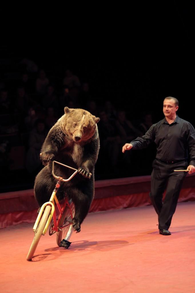 Большой Московский цирк «Триумф» фото 6