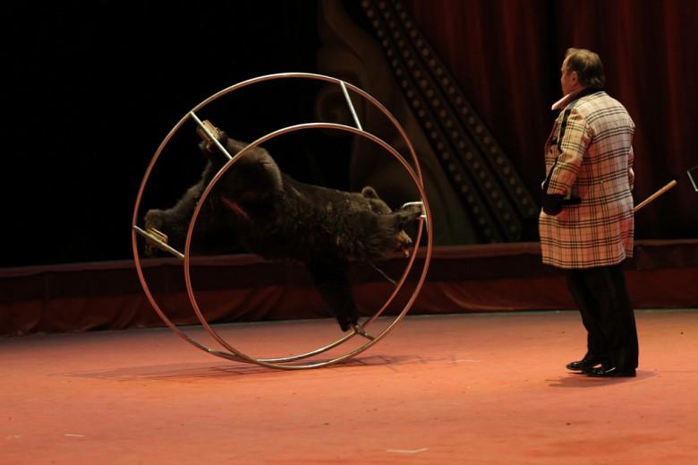Большой Московский цирк «Триумф» фото 11