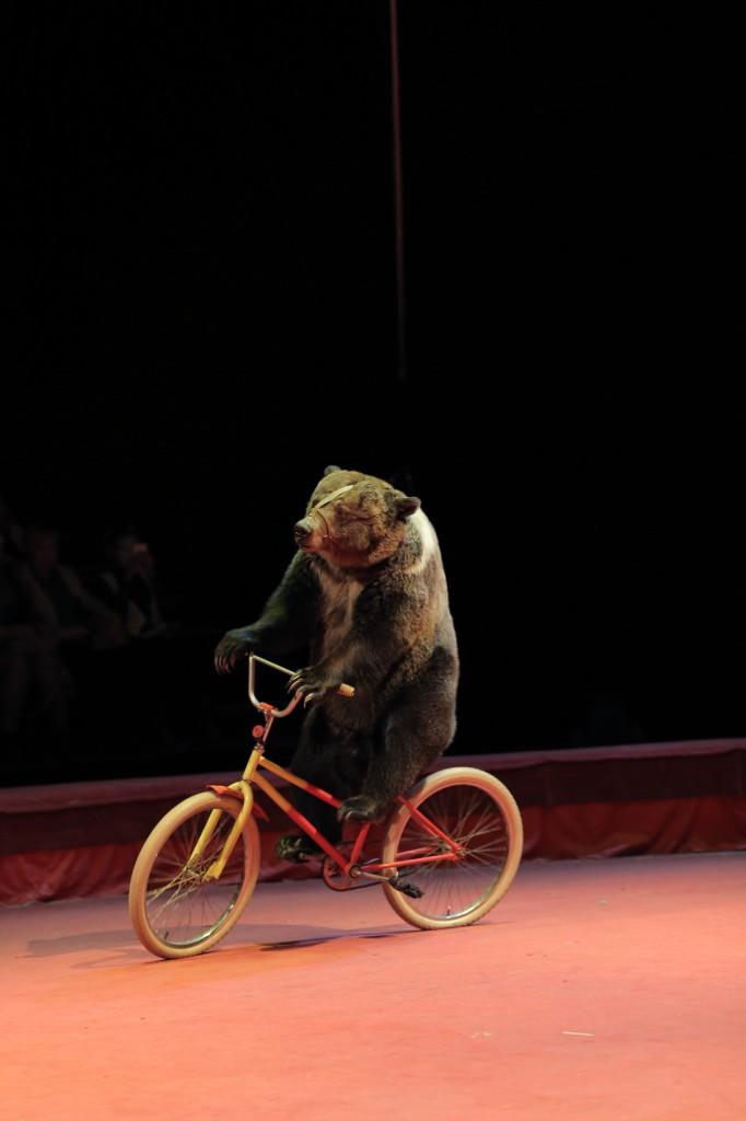 Большой Московский цирк «Триумф» фото 5