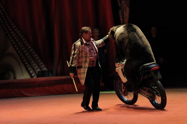 Большой Московский цирк «Триумф» фото 13