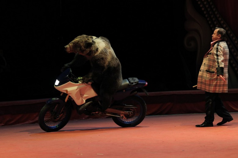 Большой Московский цирк «Триумф» фото 12