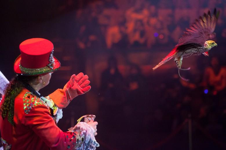 """""""Шоу Воды, Огня и Света!"""" в цирке с 19 декабря фото 9"""